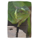 Iguana in the Tropics Towel