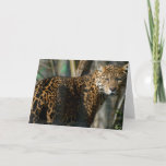 Jaguar Photo Greeting Card