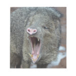 Javalina With his Mouth Wide Open Notepad