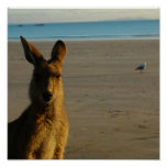 Kangaroo Photo Print