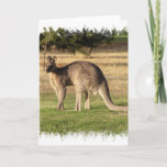 Kangaroo Picture Greeting Card