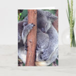 Koala Bear Family Greeting Cards