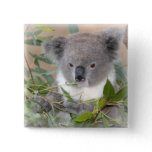 Koala Bear Square Pin