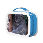 Koala Lunch Box