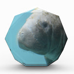 Large Manatee Underwater Award