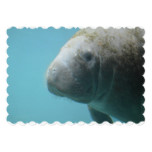 Large Manatee Underwater Card