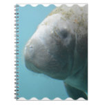 Large Manatee Underwater Notebook