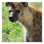 Laughing Hyena Poster