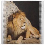 Lion Photo Set of Four Napkins
