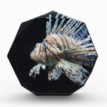 Lionfish Acrylic Award