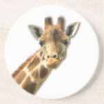 Long Necked Giraffe  Coaster
