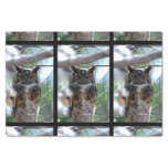 Long-Eared Owl Tissue Paper