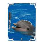 Lovable Dolphin Dry-Erase Board