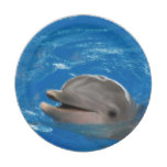 Lovable Dolphin Paper Plate