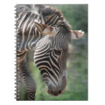 Lovable Zebra Notebook