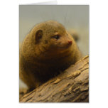 Mongoose a Tree Branch Card