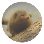 Mongoose a Tree Branch Dinner Plate