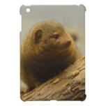 Mongoose a Tree Branch iPad Mini Cover