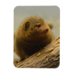 Mongoose a Tree Branch Magnet