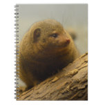 Mongoose a Tree Branch Notebook