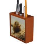 Mongoose a Tree Branch Pencil Holder