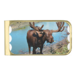 Moose Gold Finish Money Clip