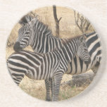 Mother and Baby Zebra  Coaster