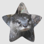 Muddy Otter Star Sticker