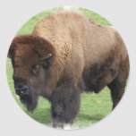 North American Bison Stickers