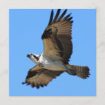 Osprey Bird Invitations