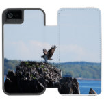 Osprey on Nest iPhone SE/5/5s Wallet Case