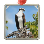 Osprey Ornament