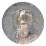 Otter Back Float Dinner Plate
