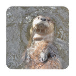 Otter Back Float Drink Coaster