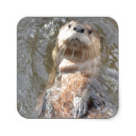 Otter Back Float Square Sticker