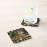 Panthera Jaguar  Cork Coasters