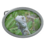 Peek-a-boo Iguana Belt Buckle