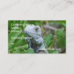 Peek-a-boo Iguana Business Card
