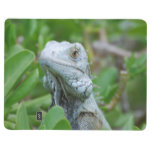 Peek-a-boo Iguana Journal