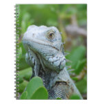 Peek-a-boo Iguana Notebook