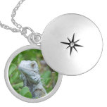Peek-a-boo Iguana Silver Plated Necklace