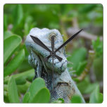 Peek-a-boo Iguana Square Wall Clock