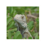 Peek-a-boo Iguana Wood Wall Art