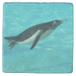 Penguin Swimming Underwater Stone Coaster