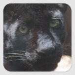 Pensive Black Panther Square Sticker