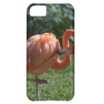 Perfect Pink Flamingo iPhone 5C Cover