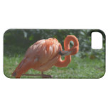 Perfect Pink Flamingo iPhone SE/5/5s Case