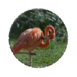 Perfect Pink Flamingo Jelly Belly Tins