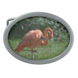 Perfect Pink Flamingo Oval Belt Buckle