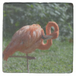 Perfect Pink Flamingo Stone Coaster